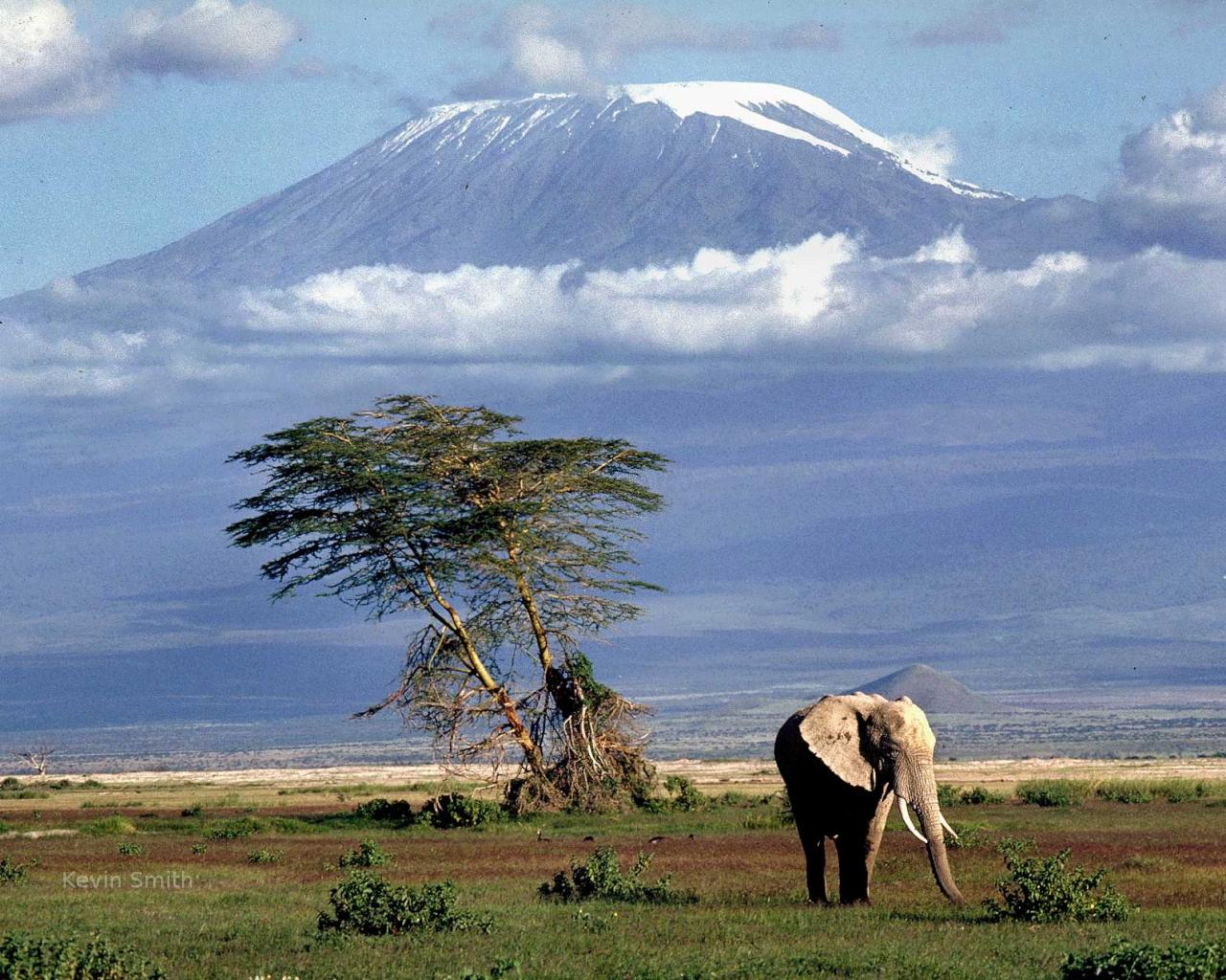 snows of kilimanjaro Ernest hemingway opens his 1936 short story the snows of kilimanjaro by  mentioning a leopard carcass up near the summit of mount.